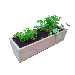 Macrocarpa Herb Planter - 600L